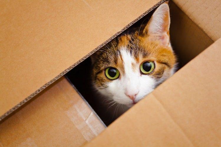 Gatos protección contra petardos