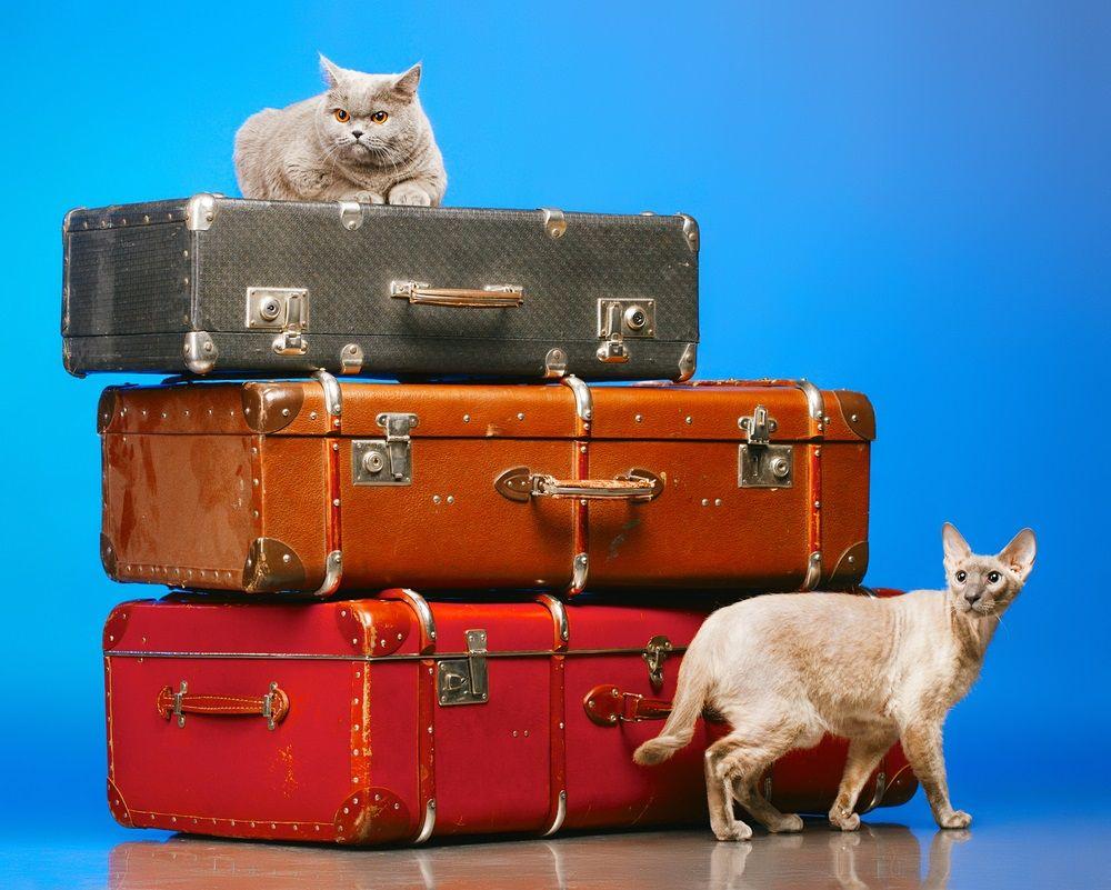 Mudanza con gatos? 5 trucos para hacerla más fácil | EROSKI CONSUMER