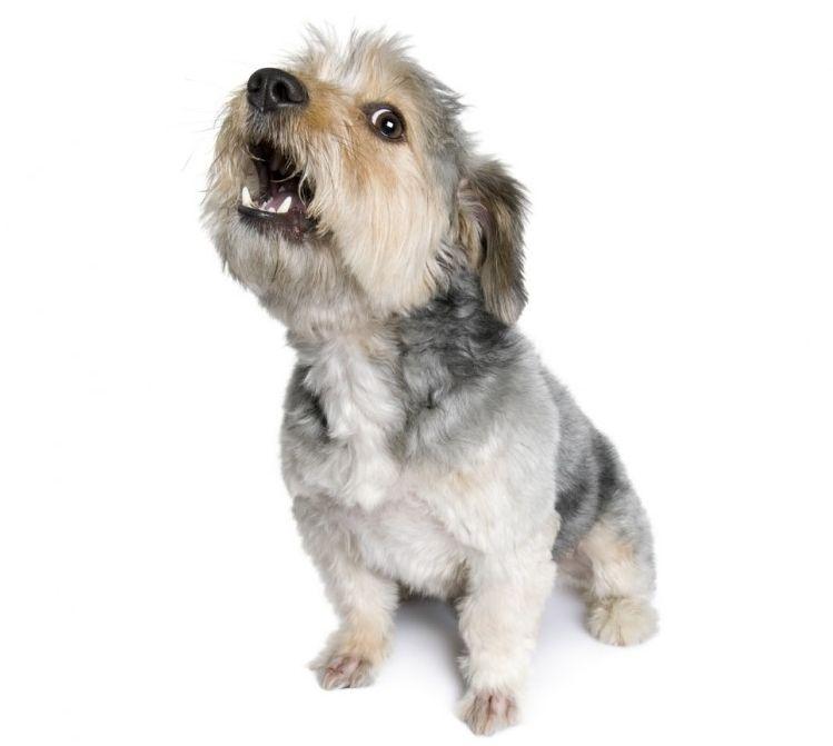 ¿Qué nos dicen los perros cuando ladran?