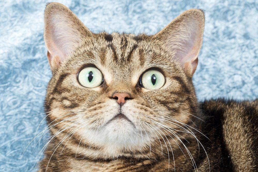 6 misterios de los bigotes del gato que necesita conocer | EROSKI ...