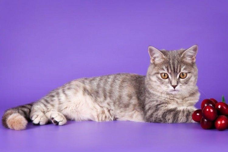 Gatos intoxicación