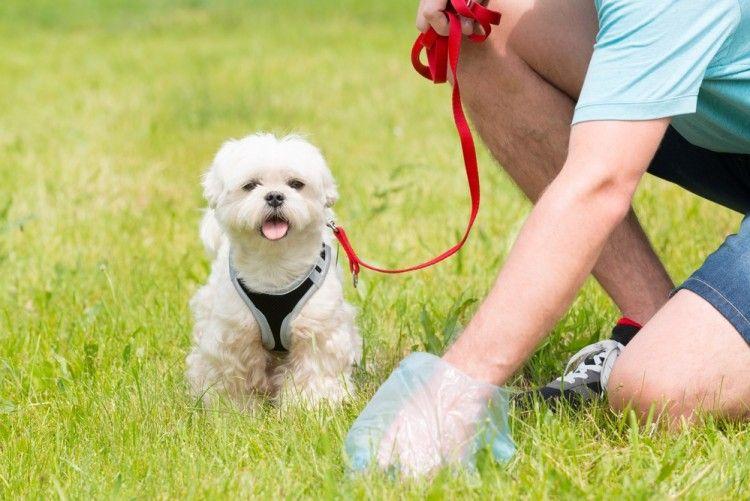 Identificación canina con ADN, ¿es necesaria?