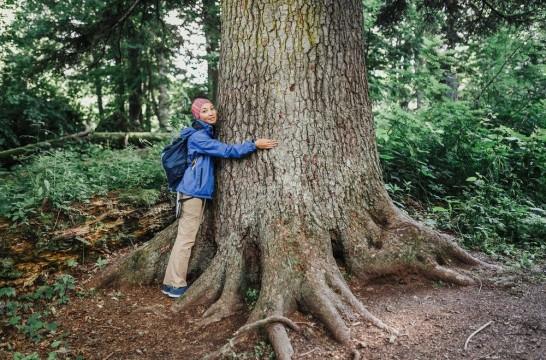 Ba os de bosque la terapia que beneficia la salud for Porque son importantes los arboles wikipedia