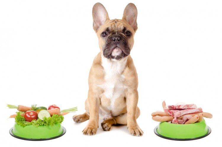 Nutrientes que no pueden faltar en la comida del perro