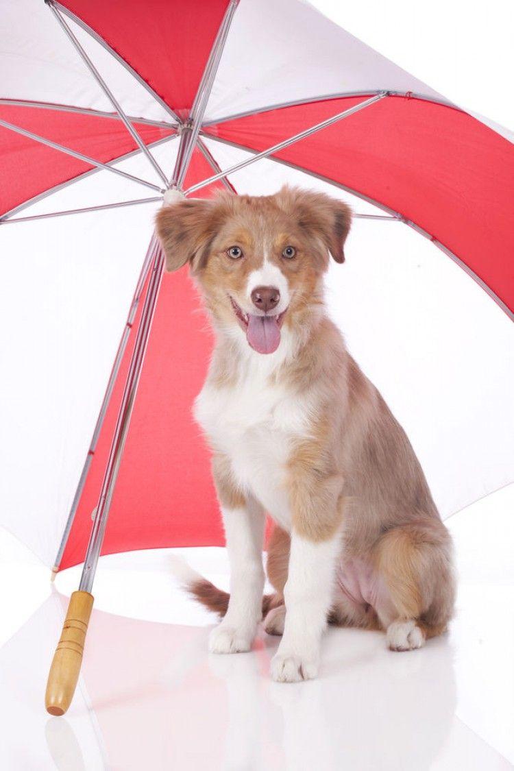 Cremas de sol para perros: siete cosas que debes saber