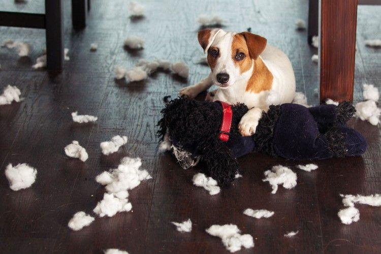 Resultado de imagen para mascotas maltratando muebles