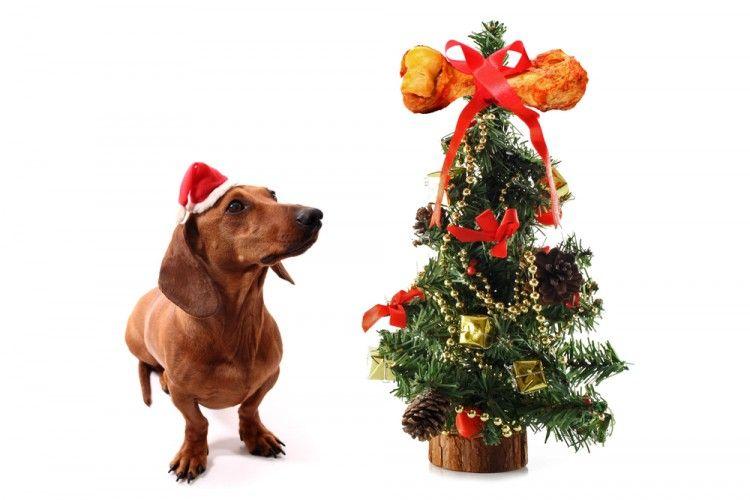 6 peligros para el perro en Navidad, ¿cómo evitarlos? | EROSKI CONSUMER