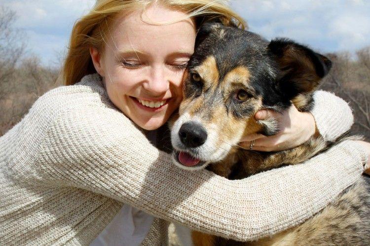 Mascotas Perro con dueño Infomascota.com