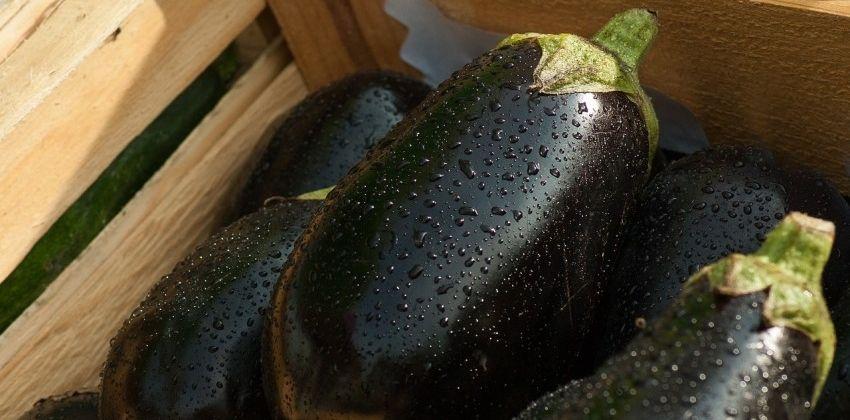 Berenjena: un globo de agua muy vistoso para cocinar
