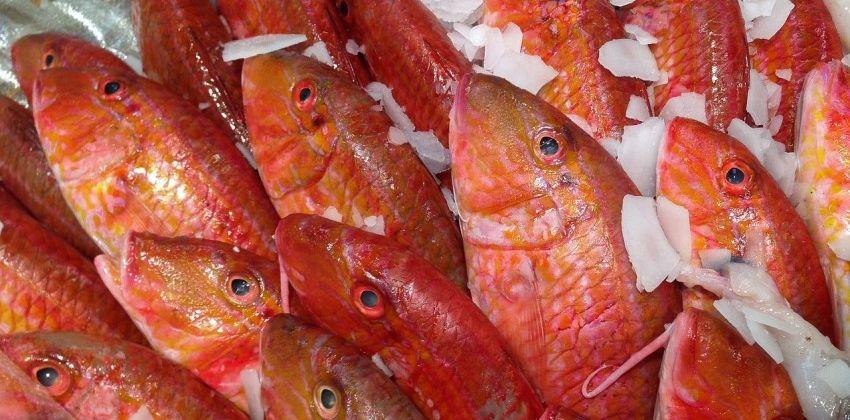 Salmonete: el curioso pescado que alegrará tu cocina